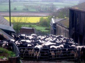 A small dairy farm in Adber, Dorset. Photo: Elliott Brown via Flickr (CC BY-NC)